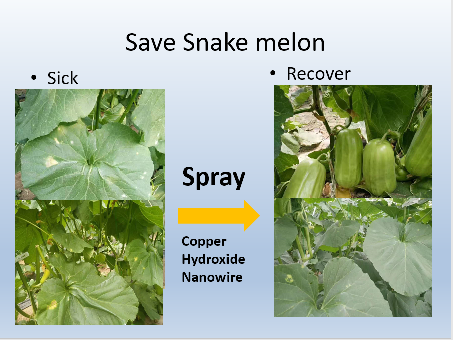 Snake melon(click here for details)